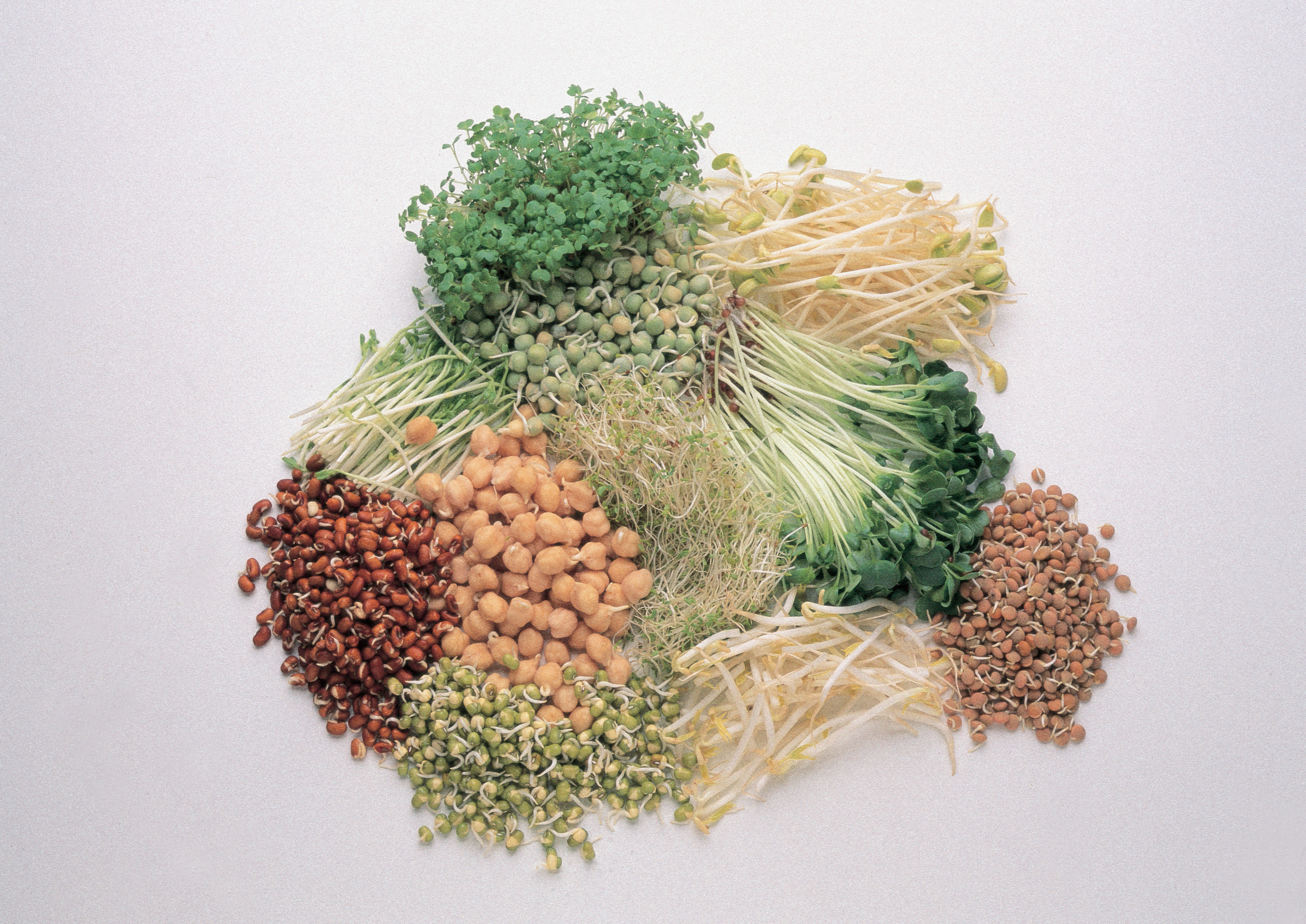 bunch of different sprouts of seeds, grains and greens in front of white background